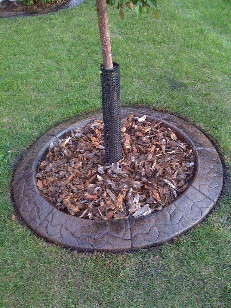 curb small tree circle