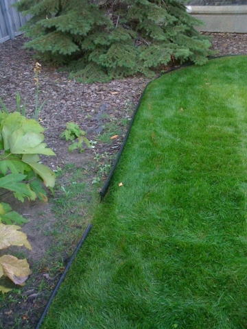 plastic edging gets hit by mower and grass climbs over